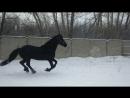 Прогулка Вегера 21.11.17. Наконец-то снег