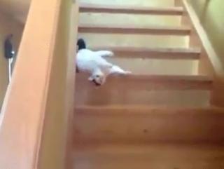 Кот спускается с лестницы
