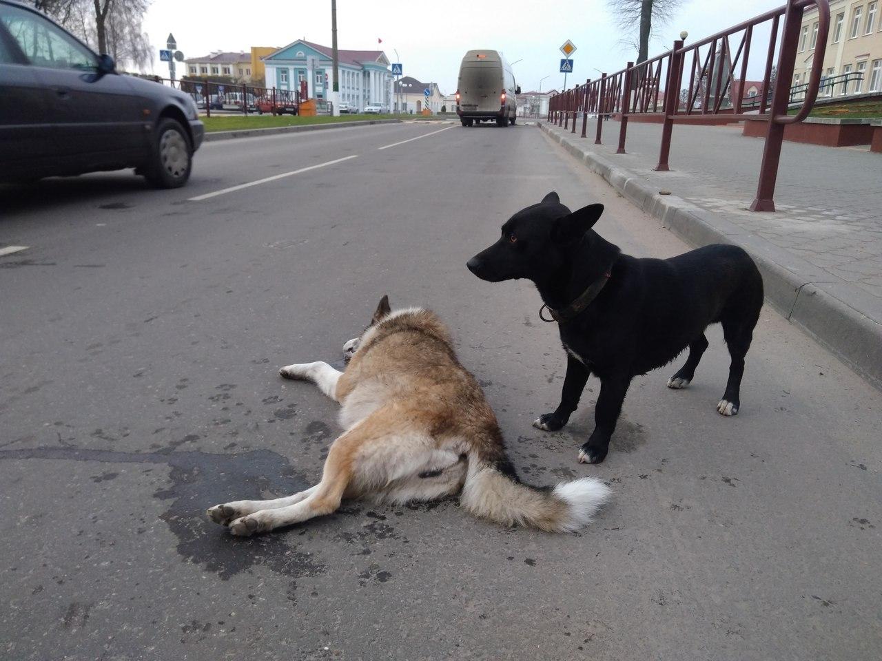 Очередное жесткое убийство бездомной собаки.