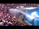 Seaworld SHAMU Killer Whale Show.mp4