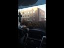 Полосатый рейс 🐅