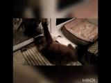 Шалфей и мышка