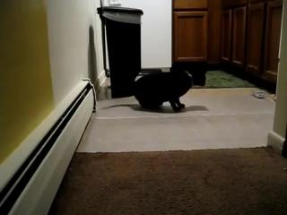 Преграда для кошки. Scat Mat 06