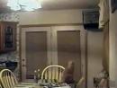 прикольне відео про котів P