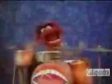 Muppet Show - Animal Plays Drums And Sings (Ultra Brutal Death Metal Grind).