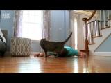 Реакция кошки на «смерть» хозяина и что она будет делать