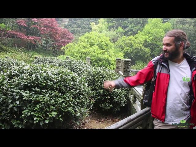 Ханчжоу. Зеленый Чай Сиху Лунцзин. Колодец Дракона с Западного Озера