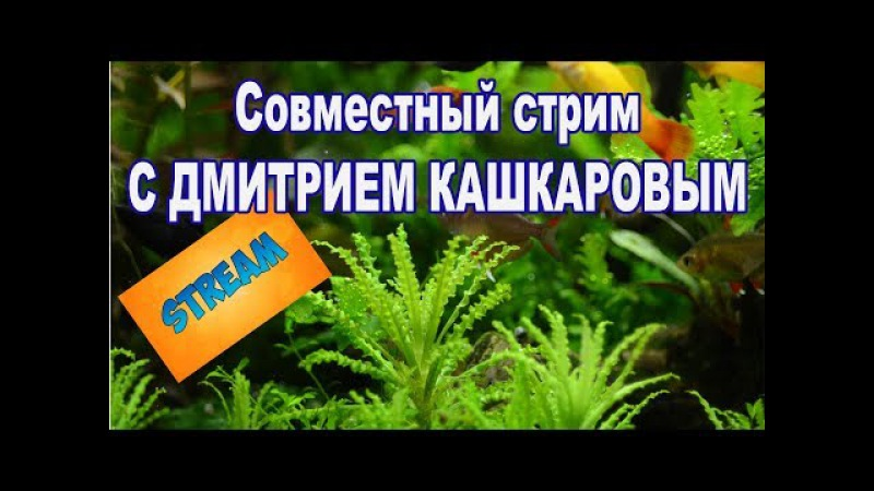 Совместный стрим с Дмитрием Кашкаровым.