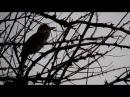 Вечерняя песня камышовки. / Evening song of a warblerю