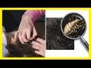 El té de la planta ruda sirve para los piojos - remedios caseros para los piojos y liendres