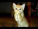 Кошки видео смешные Самые смешные приколы про кошек 2018 1 Видео коты