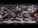 Русская рыба Документальный фильм