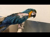 Zazu's House Parrot Sanctuary on Instagram This was before she dove into the bin. I think its safe to say she was developing the plan here. #ha...