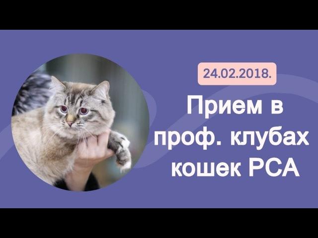 Прием в проф. клубах кошек PCA 24.02.2018г
