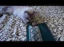 Кот обормот и вышивка.