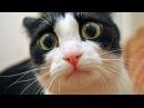 Приколы с кошками и котами! Подборка смешных и интересных видео с животными!