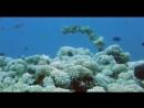 Яд Достижение эволюции 2 я серия Яд и баланс экосистемы