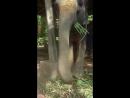 покорми слона