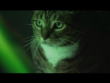 Meow Mix® Song ¦ EDM Cat Remix by Ashworth