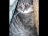 Мой кот очень странный)) испугался когда я приехала домой))