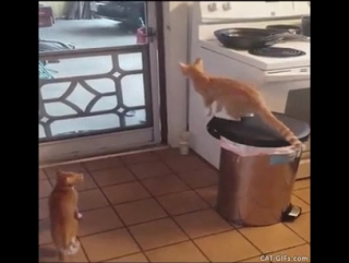 Кот открывает дверь (2)