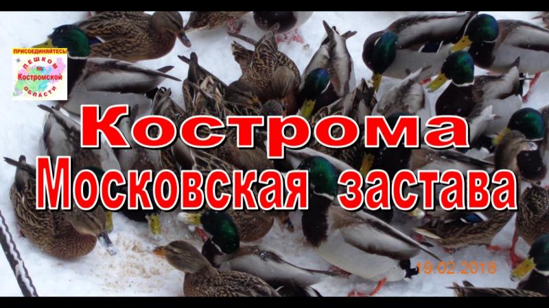 КОСТРОМА 2018. Утки на Московской заставе