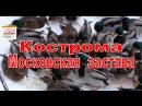 КОСТРОМА 2018 Утки на Московской заставе