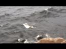 Крутой берег Валаама