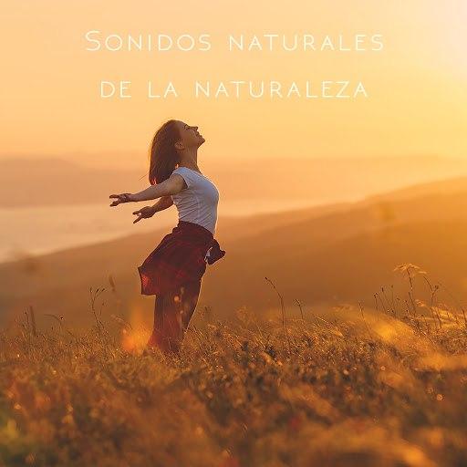 Rain альбом Sonidos naturales de la naturaleza