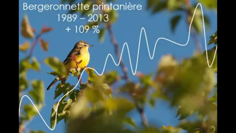 Сокращение популяции птиц во Франции....