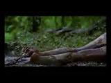 Alice Cooper - Snakebite (videoclip)