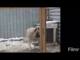ШОК!!!!!Собака танцует под татарскую музыку
