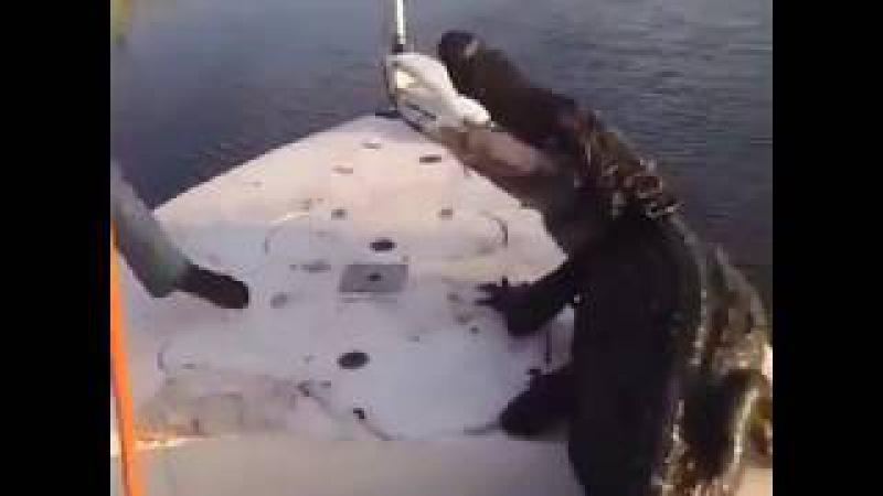 крокодил в лодке - это весело