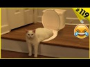 Смешные кошки приколы про кошек и котов 119 Кошки видео ТОП подборка 2018
