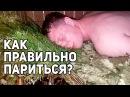 Правила ПАРЕНИЯ в РУССКОЙ БАНЕ Ищем ПЛОТНИКА В МОСКВЕ