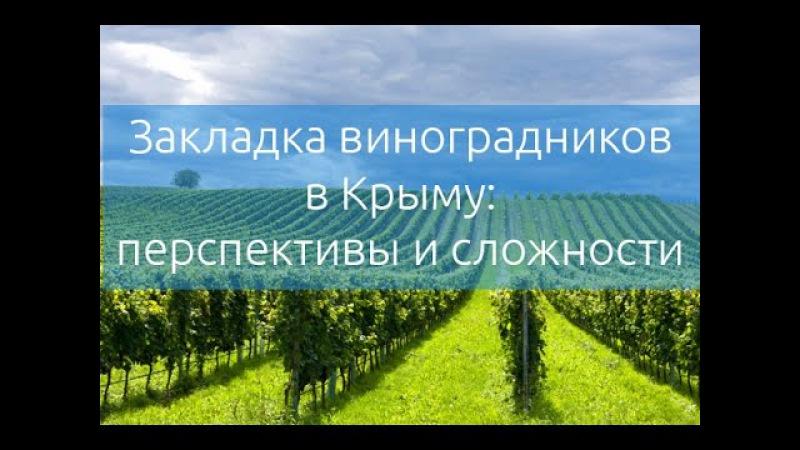Закладка виноградников в Крыму: перспективы и сложности