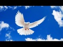 Дух Святой сказал Я скоро уйду с Земли