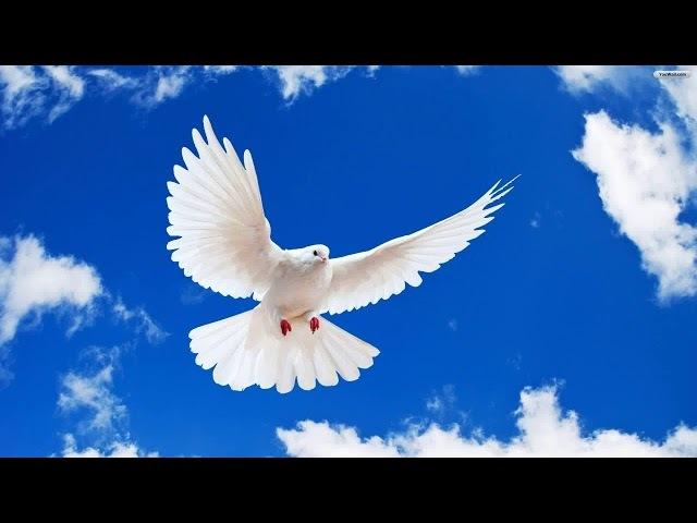 Дух Святой сказал: Я скоро уйду с Земли