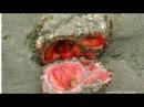 Учёные разрезали камень пополам и впали в ступор