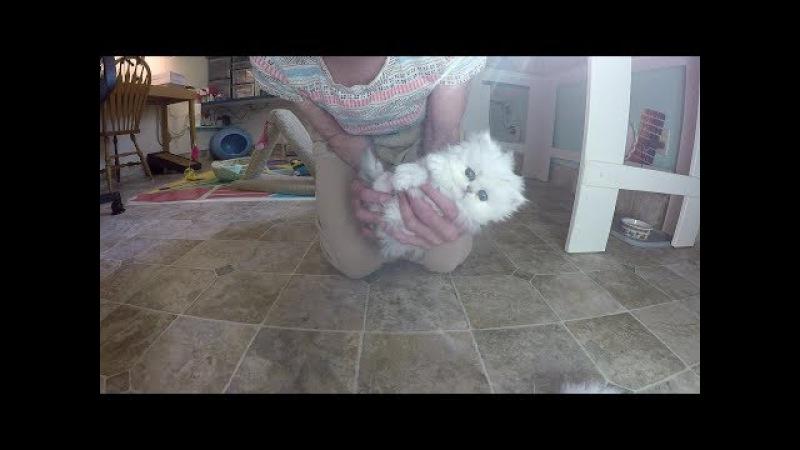 17 10 31 Cute M Litter Kittens in UpSideDown training