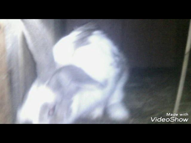 Всё о кроликах - Blog рассказываю о своих кроликов.