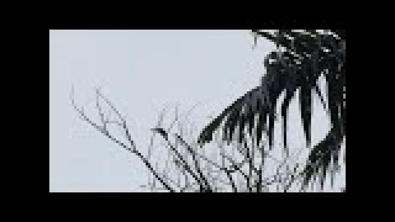 Tucanos: Sacada Anterior. Tiguera 360. Juiz de Fora, Brasil. IMG_8264. 33,5 MB. 08h50. 09mar18. 02