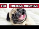 Смешные животные ленивая собака Bazuzu Video ТОП подборка 107 январь 2018