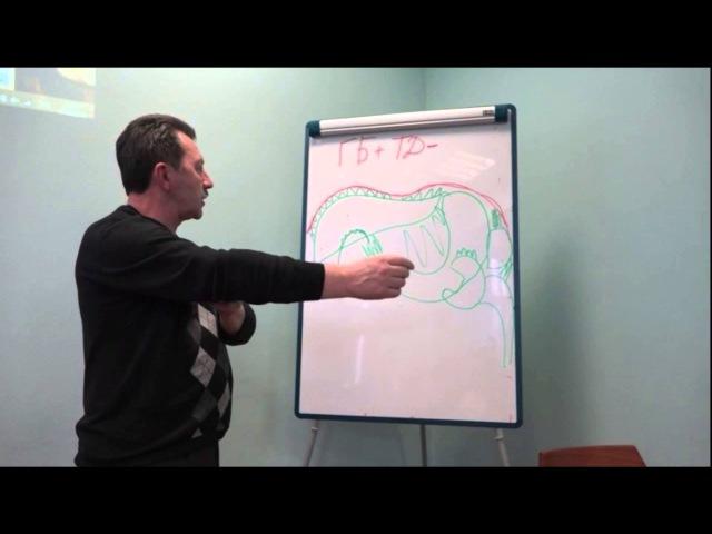 Лекция про управление органами ЖКТ. Часть 2в. Грудобрюшная диафрагма.