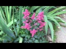 Цветочный рай на даче флоксы лилии ромашки 28 июля 2017г