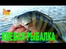 Рыбалка на Маныче Вот это улов Золотая рыбка