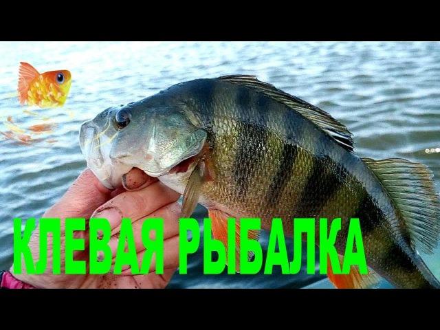 Рыбалка на Маныче. Вот это улов! Золотая рыбка