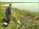 Рыбак Рыбаку 074 Красавец линь.