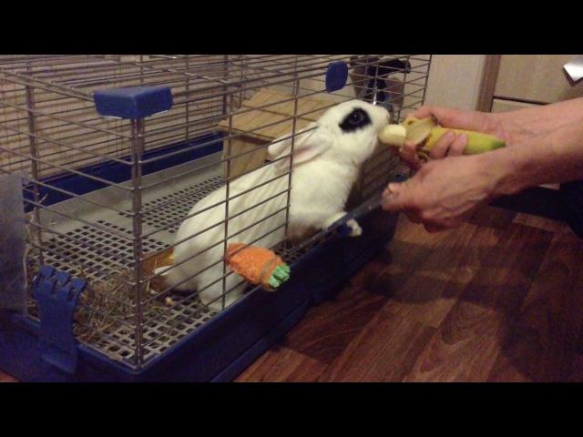 Кролик смешно ест банан