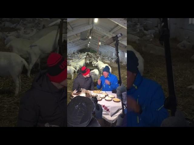 Съемки шоу Поедем поедим на Сернурском сырзаводе бекстейдж